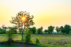 Sunrise in the moring on the field. In the morning can look at beautiful sunrise at the field Royalty Free Stock Image