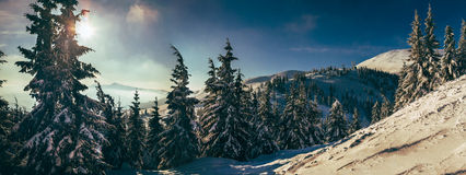 Morning in Carpathian mountains. Dragobrat Royalty Free Stock Image