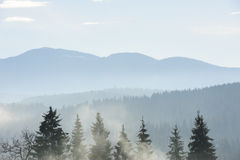 Morning in the carpathian mountains Stock Photography