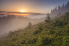 Morning in the Carpathians Stock Photography