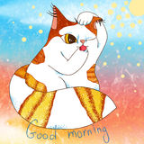 Morning cat Royalty Free Stock Photos