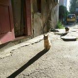 Morning cat qog animal home stock photos