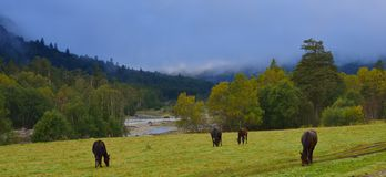 Morning in Caucasus. This is somber morning in Caucasus valley in autumn Stock Photography