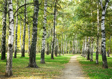 Morning city park in sunny weather. In September royalty free stock images