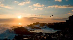 Morning coast. Sunrise on a rocky coast Royalty Free Stock Image