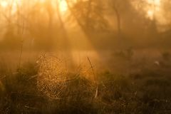 Morning cobweb Royalty Free Stock Image