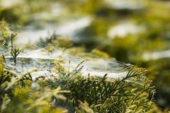 Morning cobweb Stock Images