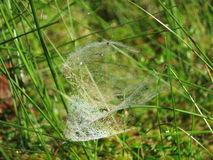 Morning. cobweb. dew. stock image