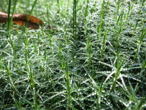 Morning. cobweb. dew. Stock Photography