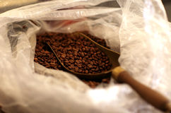 Morning coffee with Beans. Studio shot of coffee with Beans Stock Images