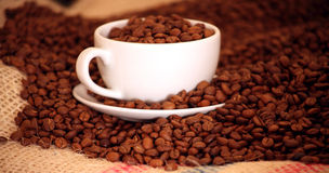 Morning coffee with Beans. Studio shot of coffee with Beans Royalty Free Stock Image