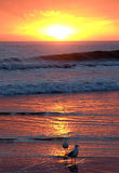Morning color. This image was taken on a gold coast beach, beautiful colors stock photo