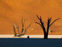 Morning is coming in Sossusvlei Royalty Free Stock Image