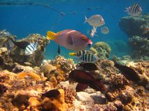Morning on a coral reef Stock Photography