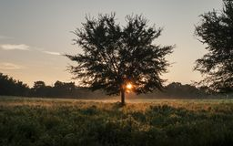 Morning in the country, meadow or pasture with sunrise royalty free stock image