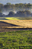 Morning in the countryside, misted fields, vertical Royalty Free Stock Photos