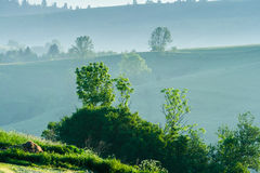Morning in the countrysides stock images