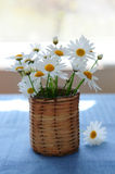 Morning daisies. Small bouquet of summer daisies in the morning Royalty Free Stock Photo