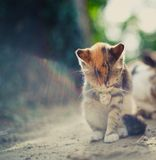 Morning. At dawn kitten washes in the sun Stock Photography