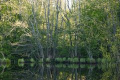 Morning dawn, spring flowering, landscape. royalty free stock images