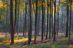 Morning in the deciduous forest Stock Photos