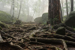 Morning in the deep forest Stock Photos