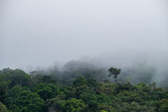 Morning deep green forest mountain cover with heavy misty fog backgrou Stock Images