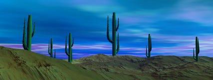 Morning in the desert Stock Images