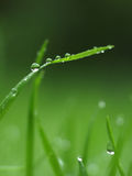 Morning Dew. Dew - Water Drops on Foliage in the Morning Royalty Free Stock Photography