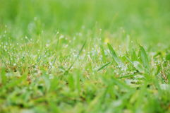 Morning dew Royalty Free Stock Images