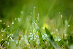 Morning Dew Royalty Free Stock Image