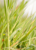Morning-dew. On a beautiful grass. Just after sunrise Royalty Free Stock Image