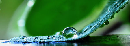 Morning dew. Capturing the details of Morning dew formed naturally from a misty morning Royalty Free Stock Photo