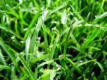 Morning Dew. Shot of grass with morning dew stock photo