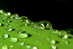Morning dew. On Grass Leaf Stock Photography