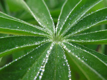 Morning dew Royalty Free Stock Photos