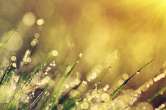 The morning dew. Abstract background of shining a bright morning dew Royalty Free Stock Photos
