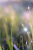 The morning dew. Abstract background of shining a bright morning dew Royalty Free Stock Image