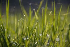 Morning Dew Royalty Free Stock Photography