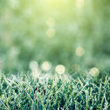 Frozen Grass Background Stock Images