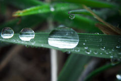 Morning dew on a blade of grass. Close up of water droplets on a blade of grass Stock Photo