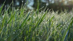 Morning dew on bush stock video footage