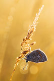 Morning dew and butterfly Stock Photo