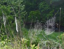 Array of spider webs in a meadow Stock Photos