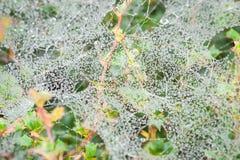 Morning dew Royalty Free Stock Photos