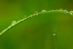 Morning dew Stock Image
