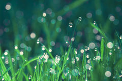 Morning dew Stock Photography