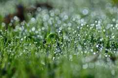 Morning dew droplets on the grass Royalty Free Stock Images