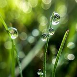 Morning dew droplets. Macro drops with green bokeh Stock Images