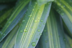 Morning Dew Droplets royalty free stock photography